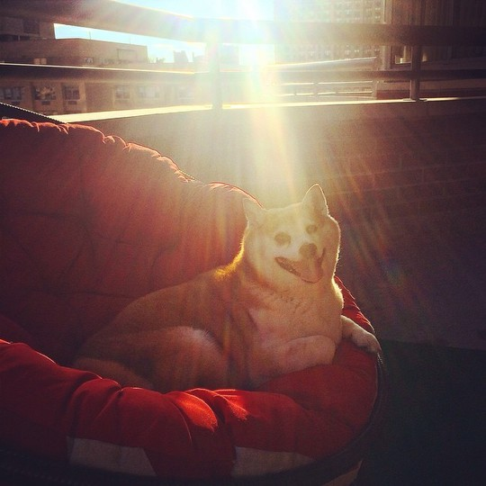 Новый хит Instagram: Собака, которая смеется