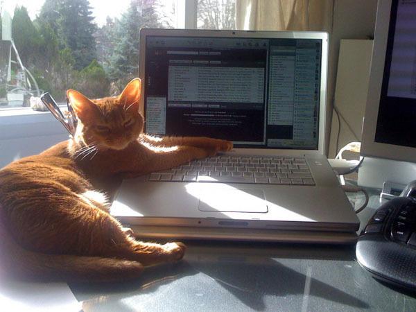 Няшная подборка котэ с ноутбуками