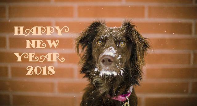 С Новым годом собаки 2018