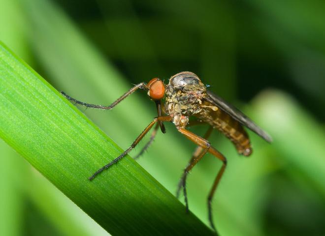 Народні засоби від комарів