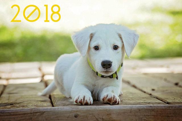 Милые обои на Новый год собаки 2018