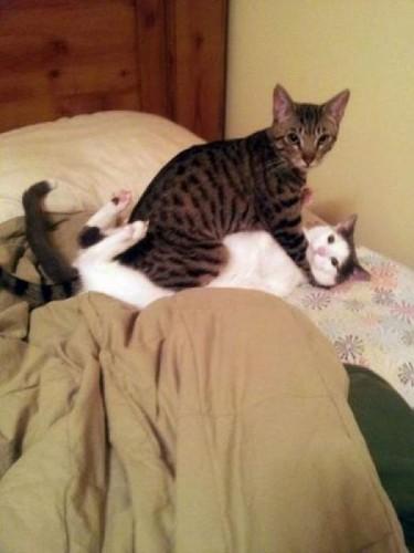 скачать смешные фото котов