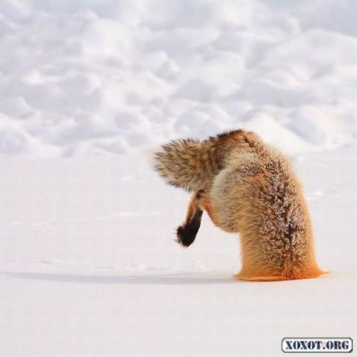 А я сказал, что я страус!