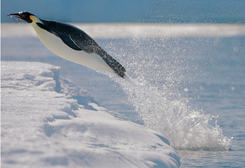 Пингвинята