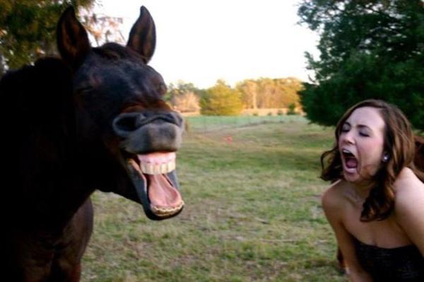 Позитивные фото с животными