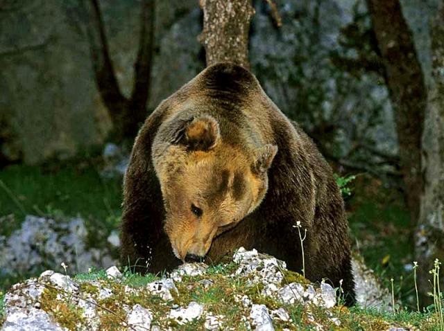 Екотуризм: куди поїхати любителю природи - Національний парк Італії Parco Nazionale d'Abruzzo