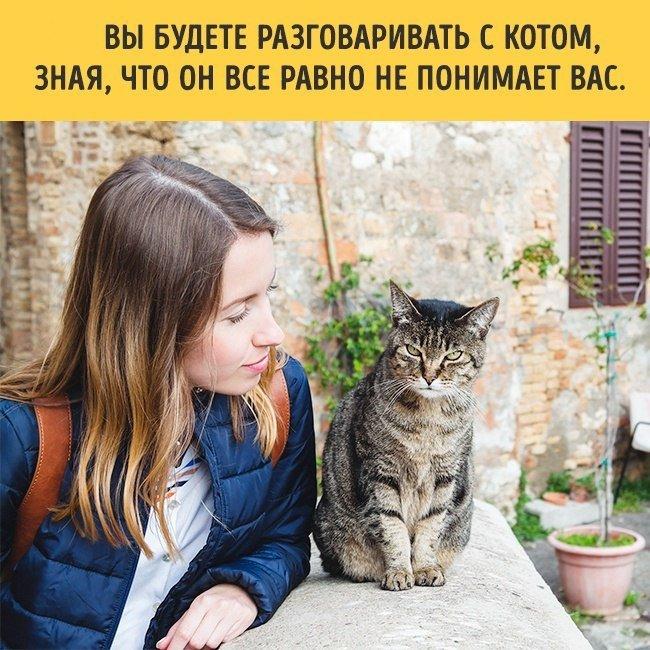 Когда в доме появляется кот. 10 фактов