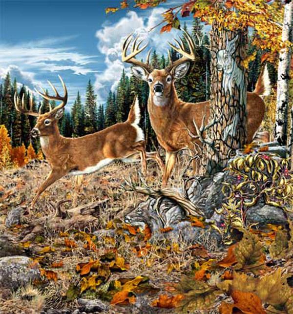 Посчитай всех животных на картинке