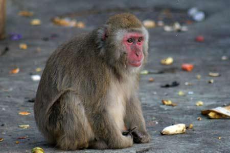 Смешные обезьянки)