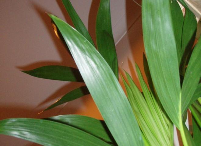 Комнатные растения: частые ошибки в уходе