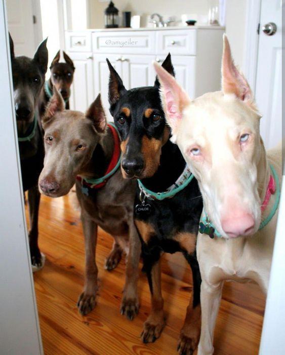 День собаки: ТОП-10 самых красивых пород