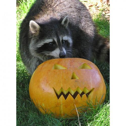 Хэллоуин в разгаре