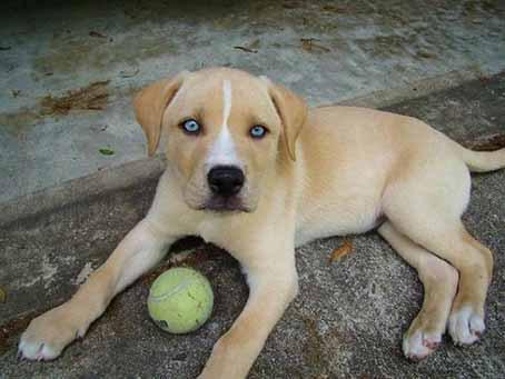 ТОП 10 видов необычных скрещенных собак