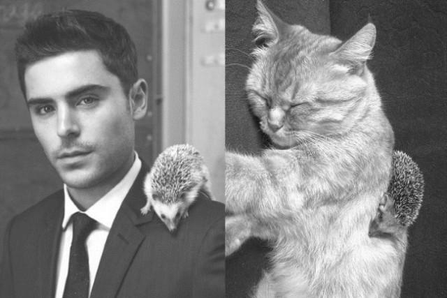 То чувство, когда кот фотогеничней тебя