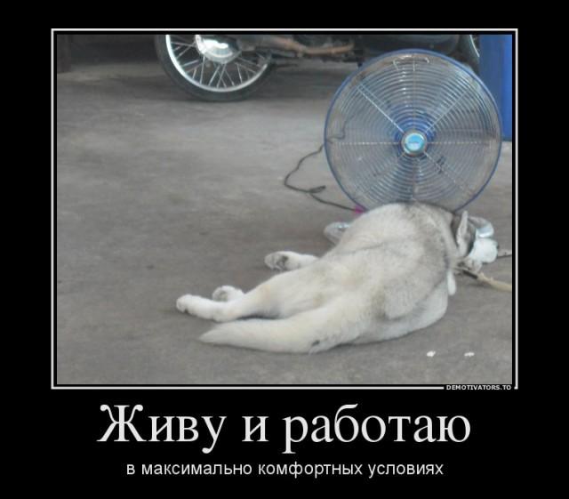 Бедные тайские собачки
