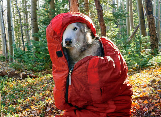 Я путешествую со своей собакой