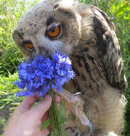 Все девушки любят цветы