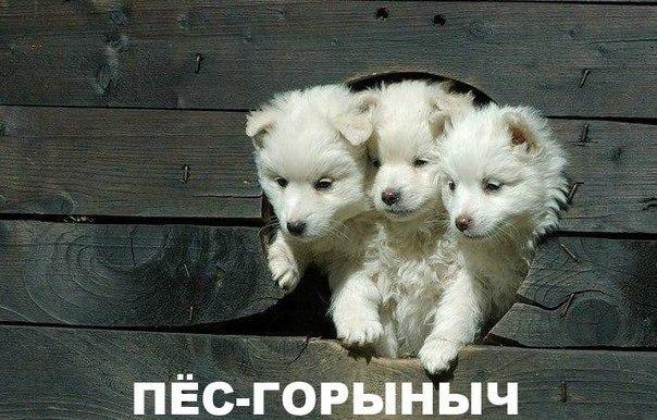 Мимимишный пес-Горыныч