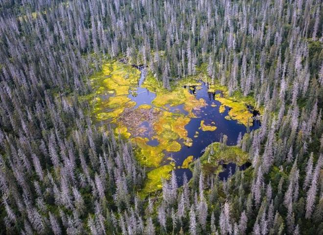 National Geographic опубликовал снимки природы для конкурса The Nature Photographer of The Year