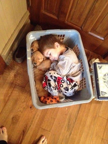 Спят усталые игрушки..