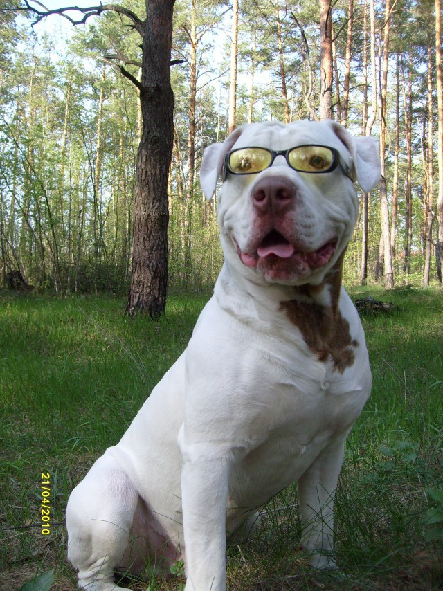 Белые Собаки-улыбаки