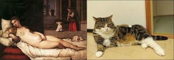 Коты против классики