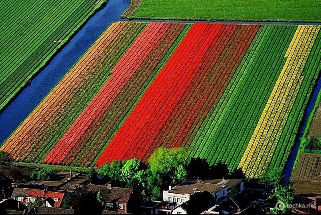Поля тюльпанов неподалеку от голландского города Лиссе