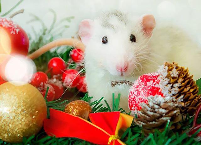 Красивая открытка на Новый год крысы 2020