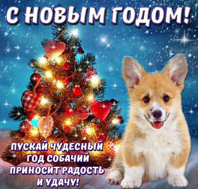 Прикольные открытки на Новый год собаки