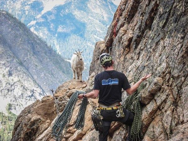 Неожиданная встреча в горах