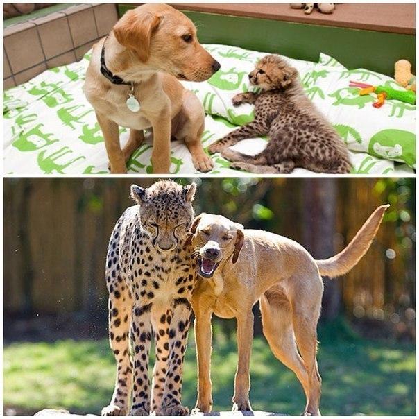Самый милый пост. Настоящая дружба существует!