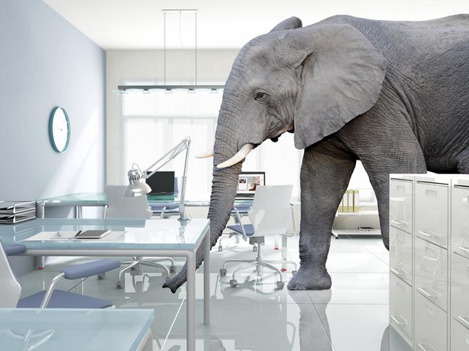 Теорія зоопарку: вивчаємо правила менеджменту