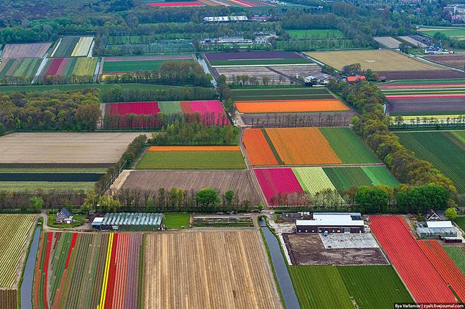 Політ над квітучими голландськими полями