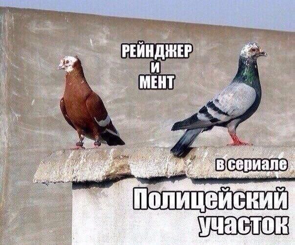 Как правильно распознавать голубей