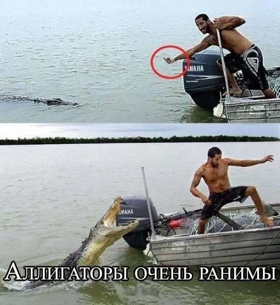 Не обижайте Аллигаторов