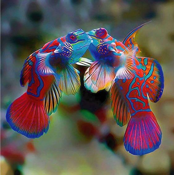 Найкрасивіші риби