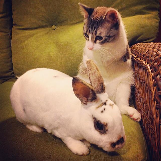 Двулапый кот Ру - новая Instagram-сенсация