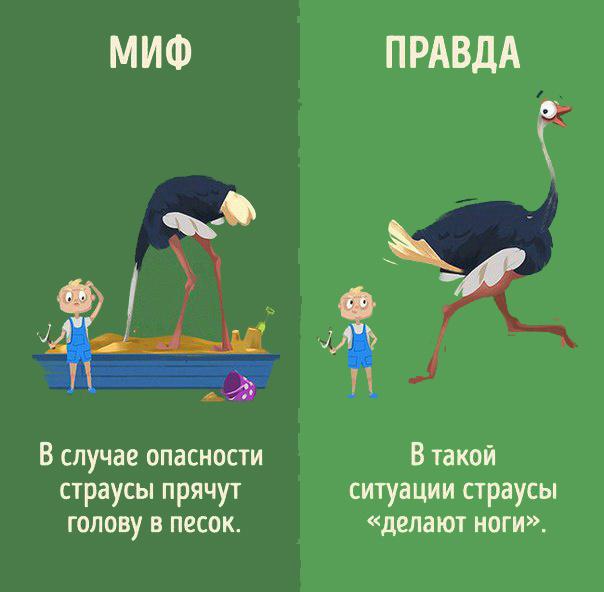 Интересно знать! Мифы и реальность