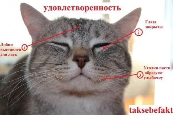 Что чувствует кошка при виде вас?