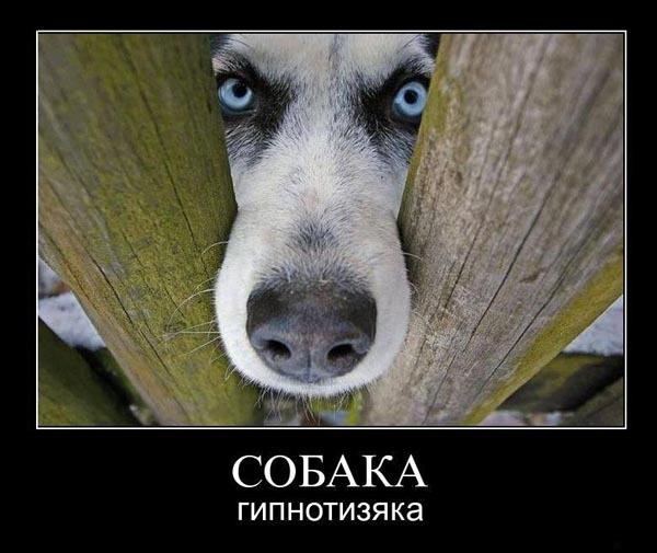 Демотиватор про собачек