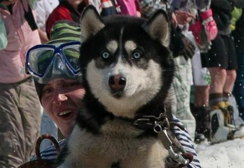 Собака в шоке