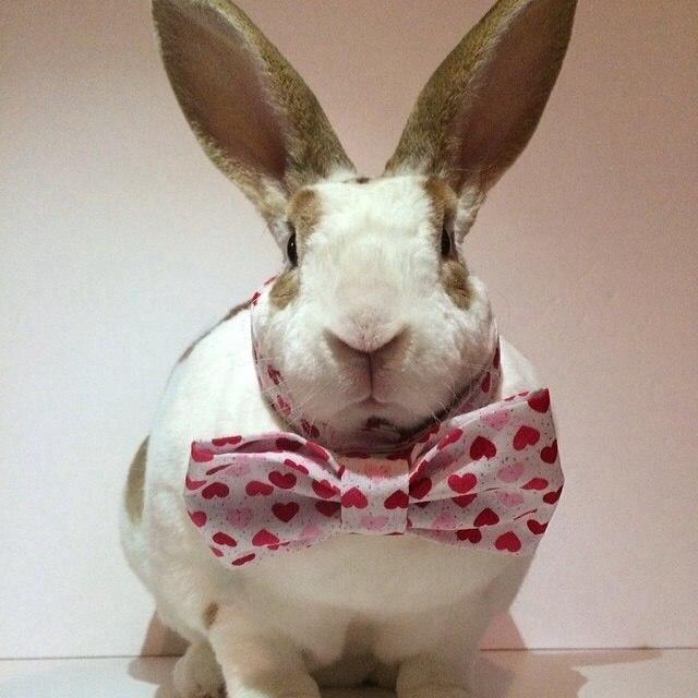 Милые фотографии кроликов