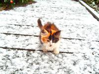 Котенок в снегу
