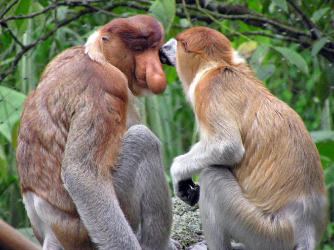 Тварини Азії, яких Всесвітній фонд дикої природи взяв під захист у 2015 році