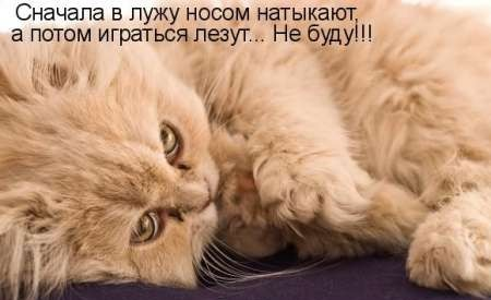 Смешные коты 2