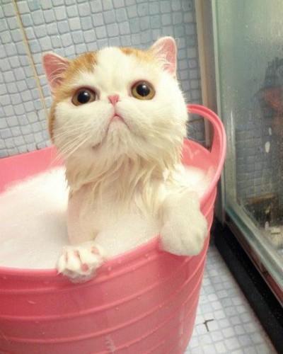 Фотографии самого милого котенка в мире | 500x400