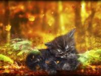 Котенок и осень