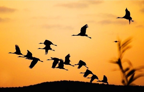 Всемирный день мигрирующих птиц