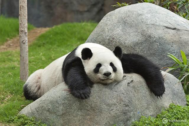Веб-камери і панди