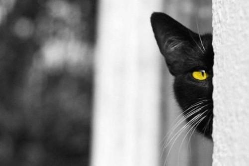 Фотоприколы с котами